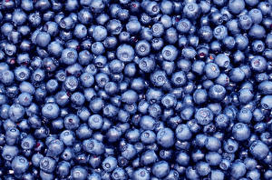 Picture Berry Blueberries Texture Many Food