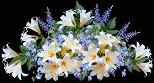 Fotos Sträuße Lilien Schwarzer Hintergrund Blumen