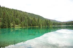 Hintergrundbilder Kanada Park See Wälder Jasper park Alberta, Rocky Mountains