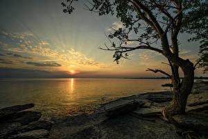 Fotos Kanada Sonnenaufgänge und Sonnenuntergänge Küste Steine Bucht Bäume Ontario Natur