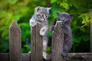 Images Cat Kittens Fence From wood Two animal