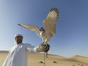 Fotos Wüste Vogel Falken Mann VAE Tiere