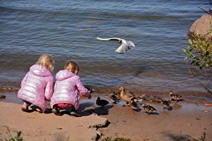 Wallpapers Ducks Gull Nestling Little girls Jacket Flight Back view Children