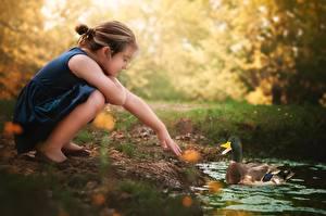 Fotos Ente Kleine Mädchen Hand kind