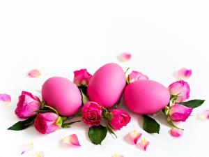 Bilder Ostern Rosen Weißer hintergrund Rosa Farbe Eier Blüte