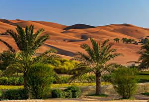Bakgrunnsbilder De forente arabiske emirater Tropene Ørken Åser Palmer Busker Abu Dhabi Natur