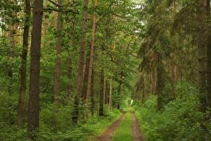 Hintergrundbilder Wälder Straße Bäume Gras