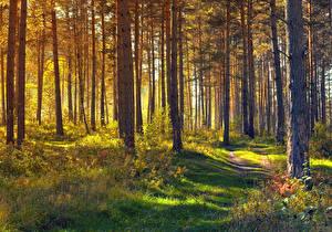 Hintergrundbilder Wälder Bäume Gras Weg