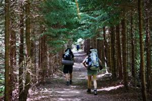 Fotos Wälder Vereinigte Staaten Parks Bäume Weg Gehen Touristik Reisender Rucksack West Virginia, Dolly-Sods Natur