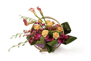 壁纸,,華道,玫瑰,馬蹄蓮,蘭花,白色背景,花卉