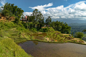 Bilder Indonesien Tropen Wasser Acker Hügel Bäume Gras Limbong
