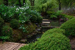 デスクトップの壁紙、、日本、京都市、庭園、池、アジサイ、低木、Shokado Garden、自然
