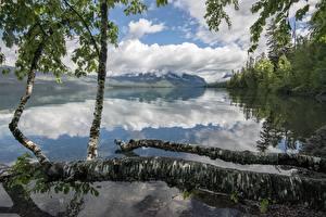 Image Lake Forests Mountains Parks USA Reflection Trunk tree Birch Lake McDonald, Glacier National Park, Montana Nature