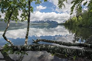 Image Lake Forest Mountain Parks USA Reflection Trunk tree Birch Lake McDonald, Glacier National Park, Montana