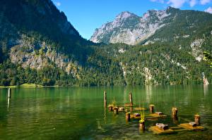 Picture Lake Mountain Forest Parks Germany Cliff Bavaria Berchtesgaden national Park, Schonau am Konigssee Nature