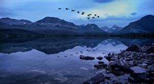 Wallpapers Lake Stones Mountains Birds Parks USA Evening Flight Glacier National Park, Rocky Mountains, Montana Nature