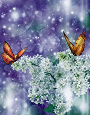 Fonds d'écran Syringa Papilionoidea Branche Blanc Fleurs