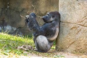 Fotos & Bilder Affen Sitzend Ast Tiere