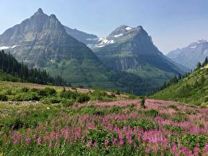 Picture Mountain Meadow USA Parks Scenery Rock Grass Glacier national Park, Rocky Mountains, Montana Nature