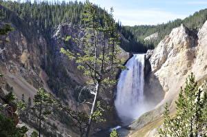 Bilder Berg Fluss Wasserfall Vereinigte Staaten Yellowstone Felsen Fichten Yellowstone River, Wyoming Natur