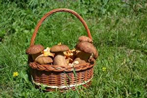 Wallpapers Mushrooms nature Penny bun Grass Wicker basket