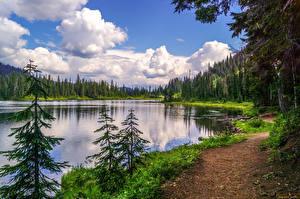Fotos Flusse Wald Küste Landschaftsfotografie Fichten Gras Natur