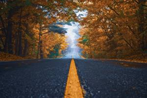 Bilder Straße Herbst Asphalt Bäume Strips Natur