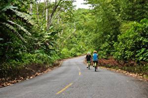 Bilder Straße Wälder Asphalt Fahrräder Zwei Bocas Del Toro, Panama