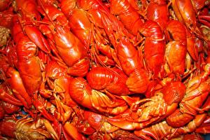 Hintergrundbilder Meeresfrüchte Flusskrebs Viel Lebensmittel