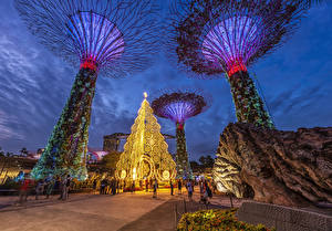 Fotos Singapur Abend Parks Design Gardens by The Bay Natur