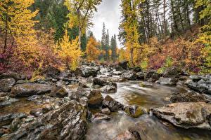 Fotos Steine Herbst Wälder Vereinigte Staaten Laubmoose Bach Flathead National Forest, Montana state