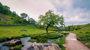 Bilder Steine England Bäche Weg Gras Bäume Hügel Yorkshire Dales national Park, Yorkshire Natur