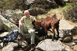 Bilder Steine Hausziege Ziegen Mann Horn Alter Mann Sitzend ein Tier