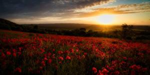 Bilder Morgendämmerung und Sonnenuntergang Acker Mohnblumen Lichtstrahl Natur