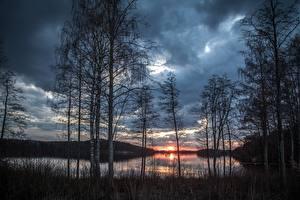 Fotos Sonnenaufgänge und Sonnenuntergänge See Bäume Birken Natur