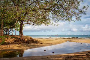Fotos Tropen Küste Bäume Strand Costa Rica Natur