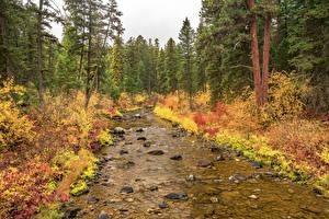Hintergrundbilder Vereinigte Staaten Park Herbst Wald Steine Fichten Bach Flathead National Forest Natur