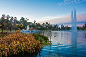 Fotos Vereinigte Staaten Park See Gebäude Springbrunnen Los Angeles Echo Park Lake Natur