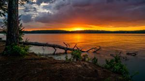 Images USA Parks Sunrises and sunsets Rivers Trunk tree Glass Bridge Park Nature