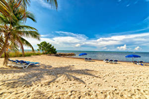 Hintergrundbilder USA Florida Strände Sonnenliege Palmengewächse Regenschirm Smathers Beach Natur