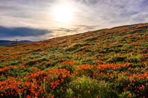 Fotos & Bilder USA Sonnenaufgänge und Sonnenuntergänge Felder Mohn Kalifornien Lancaster Natur