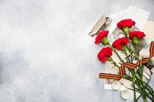Papel de Parede Desktop Dia da Vitória 9 de maio Dianthus flor