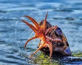 Bilder Wasser Kraken Seelöwen Jagd
