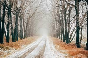Fotos Winter Straße Schnee Bäume Allee Nebel