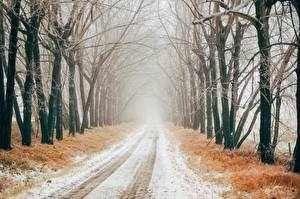Fotos Winter Wege Schnee Bäume Allee Nebel Natur