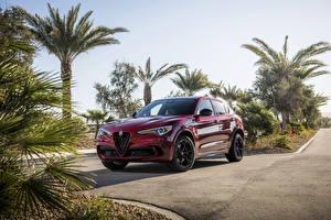 Bilder Alfa Romeo Rot Metallisch 2019 Stelvio Quadrifoglio Nero Edizione auto