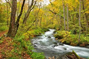 Fotos Herbst Wald Fluss Bäume Natur