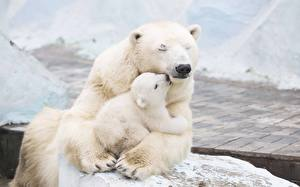 Image Bears Polar bears Cubs Two Hug Lovely Animals