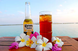 Hintergrundbilder Bier Frangipani Flaschen Trinkglas Corona Extra Lebensmittel Blumen