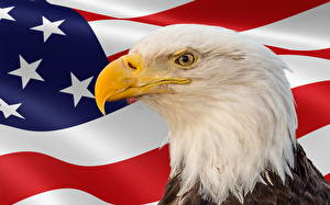 Pictures Bird Eagle USA Holidays Head Flag Beak Memorial Day Animals